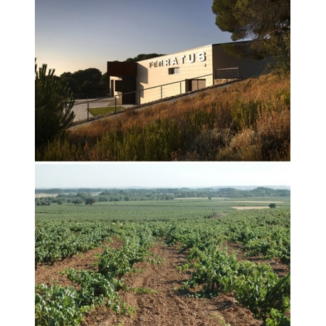 Pictures from Bodegas Ferratus (Ribera del Duero - Spain)