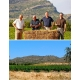 Pictures from Bodegas Castaño (Yecla - Spain)