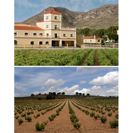Pictures from Bodegas Bleda (Jumilla - Spain)