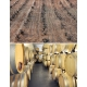 Pictures from Bodegas Pico Cuadro (Ribera del Duero - Spain)
