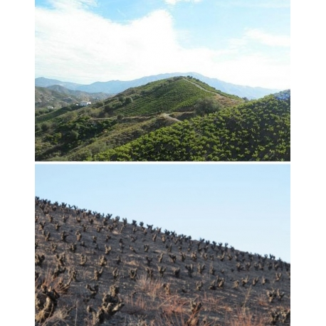 Pictures from Bodegas Breca (Calatayud - Spain)