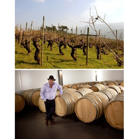 Pictures from Bodegas Avancia (Valdeorras - Spain)