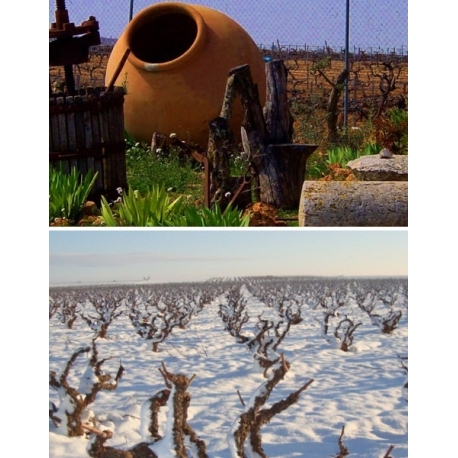 Pictures from Vinos y Viñedos Vega Tolosa (Manchuela - Spain)