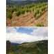 Pictures from Finca Viñoa (Ribeiro - Spain)