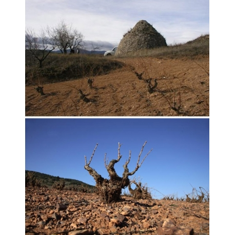 Pictures from Bodegas Borsao (Campo de Borja - Spain)