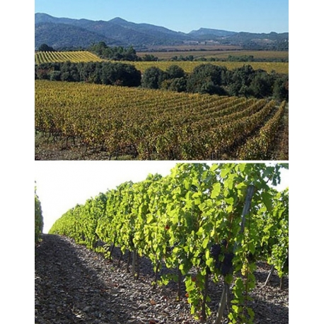 Pictures from Bodegas Cara Nord (Montsant - Spain)