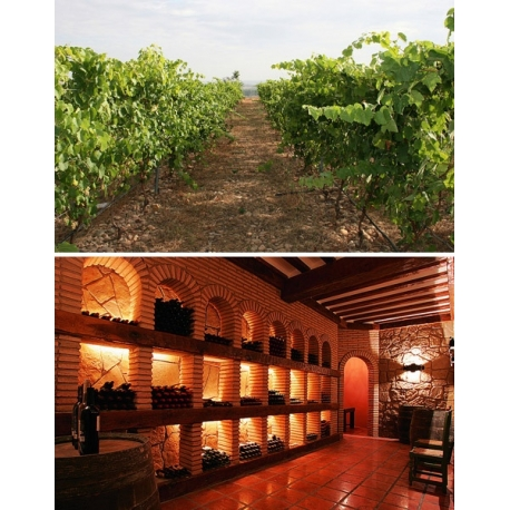 Pictures from Bodegas Maetierra (Ribeiro - Spain)