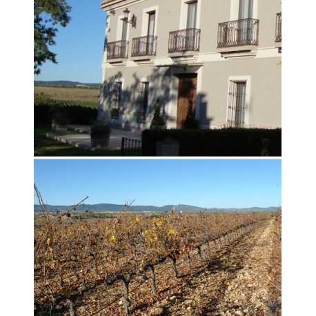 Pictures from Viñedos y Bodega Mustiguillo (El Terrerazo - Spain)