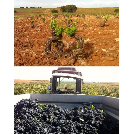 Pictures from Bodegas Asenjo & Manso (Ribera del Duero - Spain)