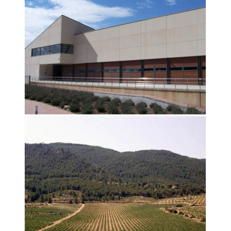 Pictures from Bodegas Sierra Salinas (Alicante - Spain)