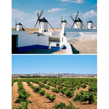 Pictures from Viña Luparia (La Mancha - Spain)